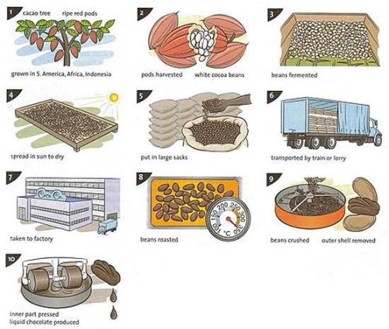 Chocolate production IELTS