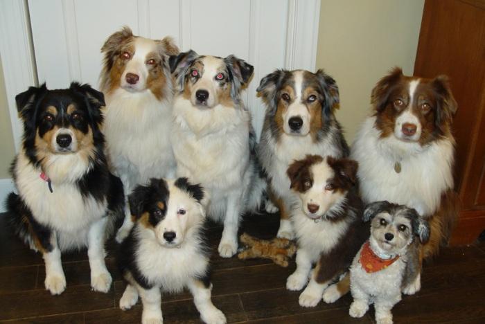 pet owndership IELTS PTE