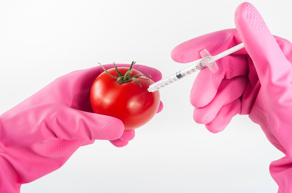 Injection Tomato Food Genetic Modified Genetically
