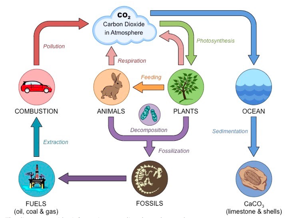 Carbon Cycle IELTS Task 1 Academic.png